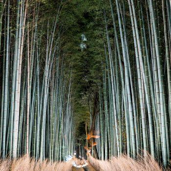 Arashiyama Bamboo, 2016