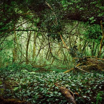 Deutscher Wald, 2017